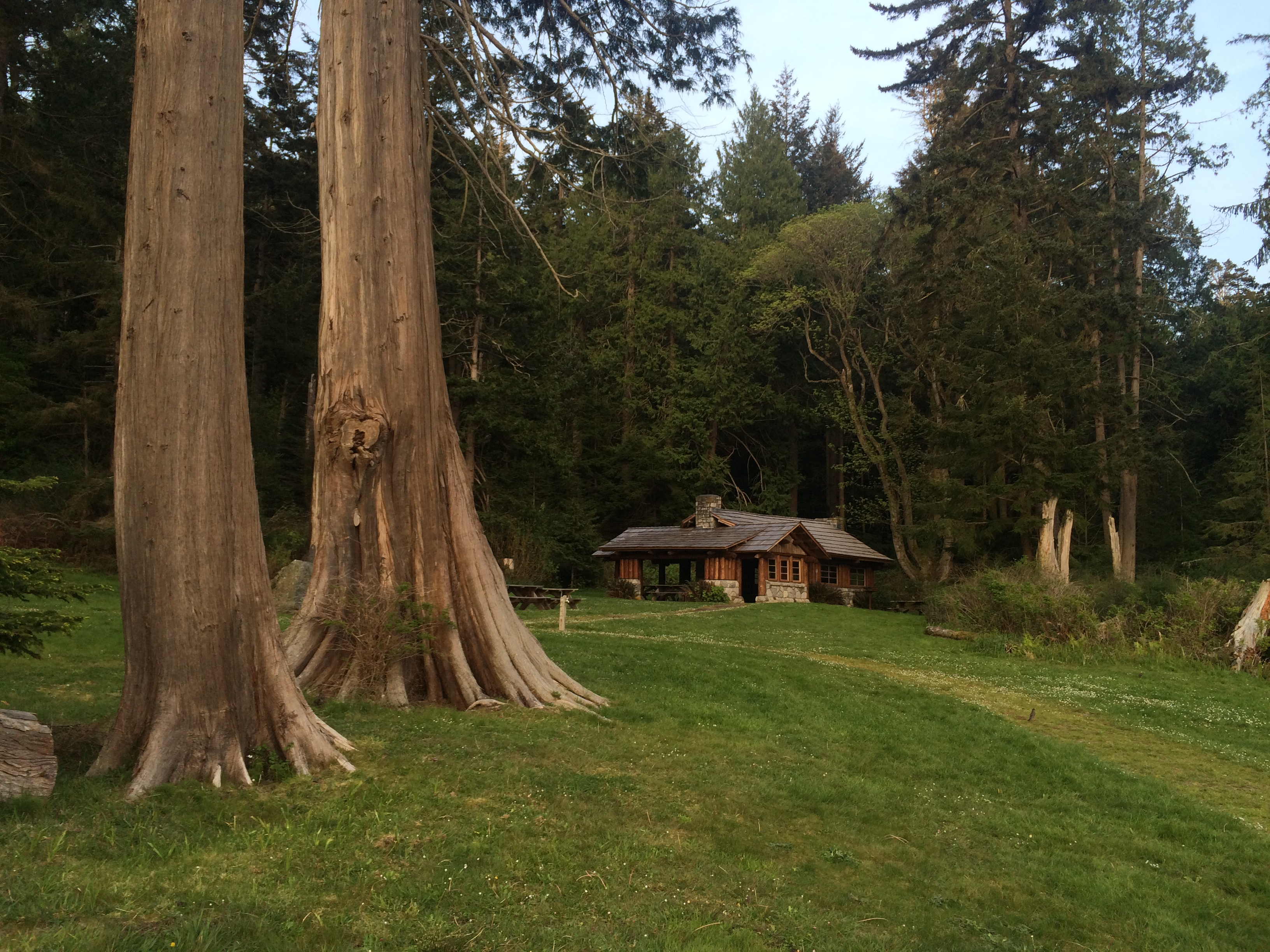 Old growth trees and a rustic cabin